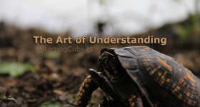 StartingCube31 - The Art of Understanding
